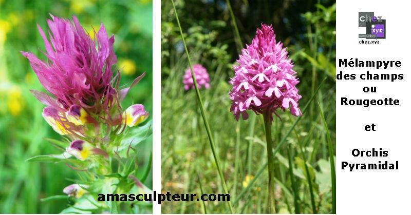 De la ficelle et des fleurs